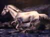 cavallo-bianco-in-corsa-gessetti-colorati-35x50