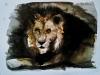 leone-acquerello-35x50