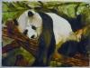 panda-acquerello-20x30